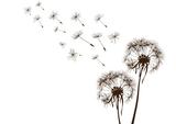 ŚRÓDMIEŚCIE | Moja Terapia